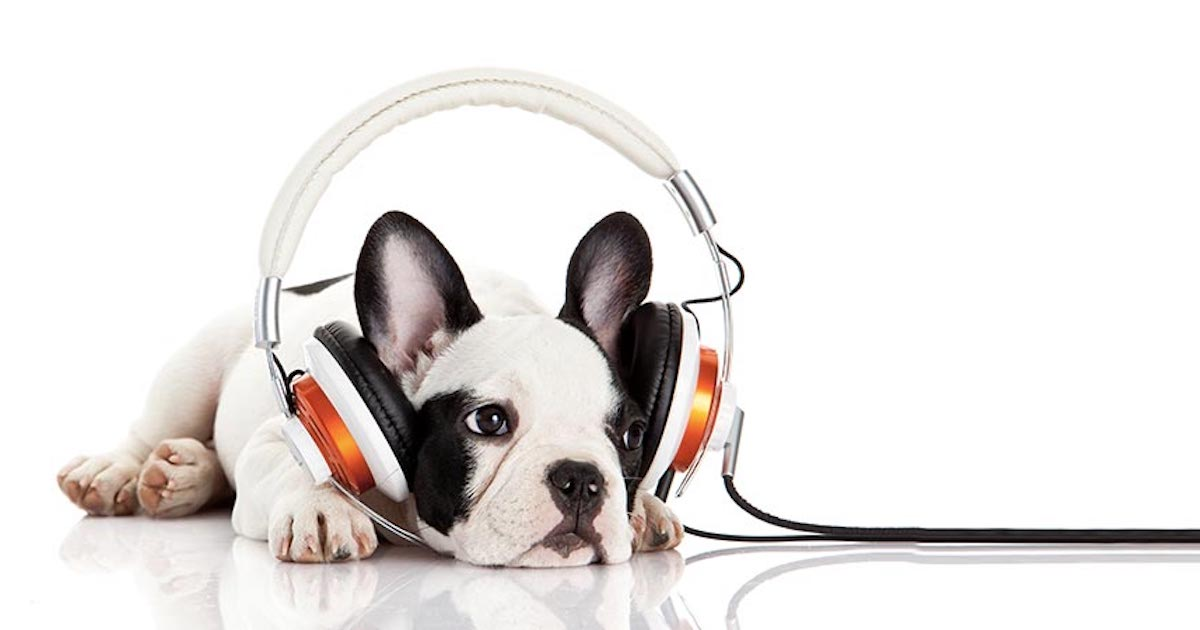 Dog podcast.jpg