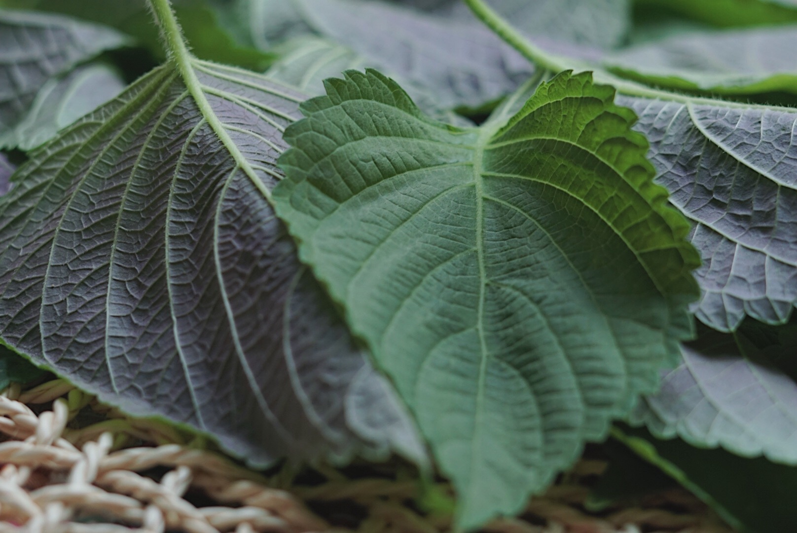 Find leaves with a deep green color & tender leaves. - (they also come pre-trimmed at the asian market sometimes!)