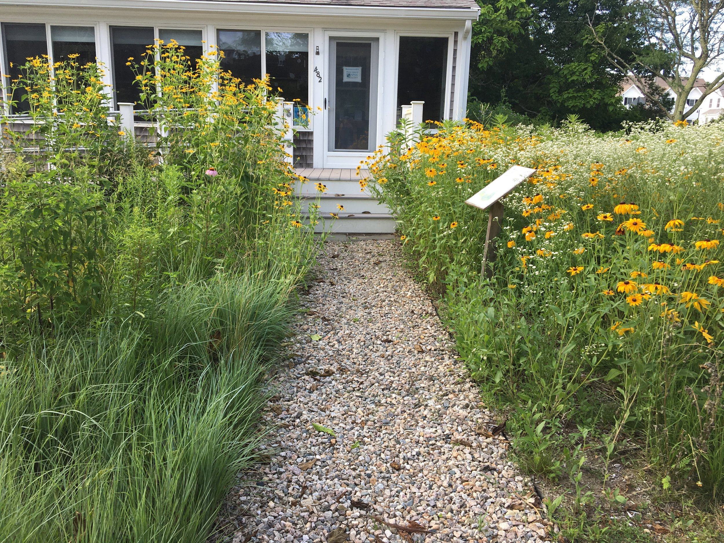 DURING: View of meadow garden at front entrance to APCC Headquarters