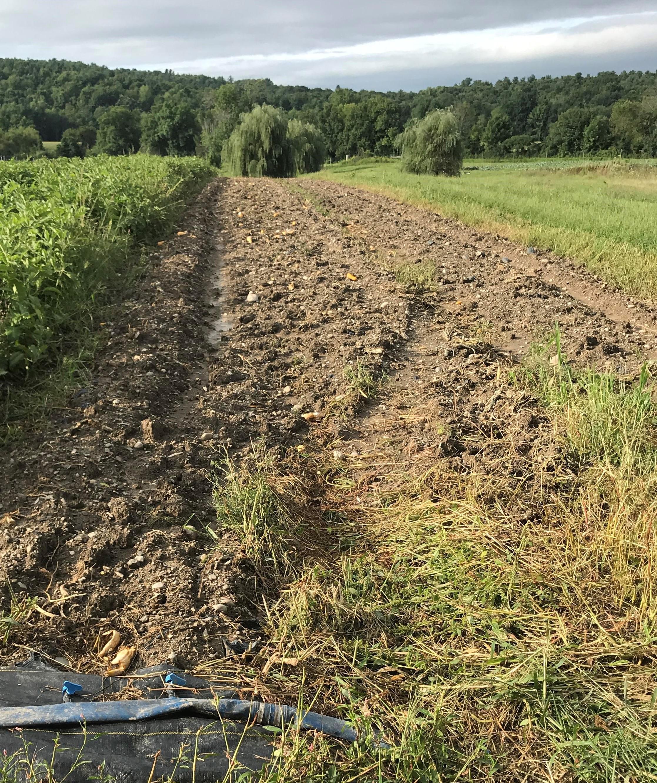 Soil erosion at Katchkie