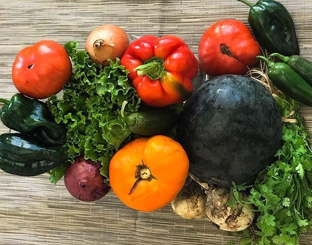 #katchkiefarm #csa week XI— can you believe we're half way through the season veggie loverz? 👨🏻🌾❤️