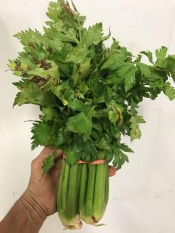 spotted leaf celery.jpg
