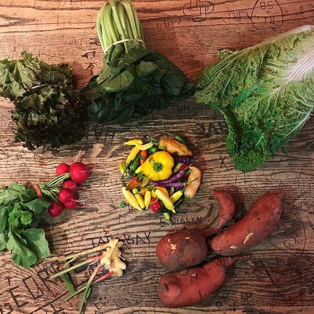 Look at dem pepperz 🔥🤯and fresh ginger! Wowwwww! #katchkiefarm #csa week 1️⃣8️⃣