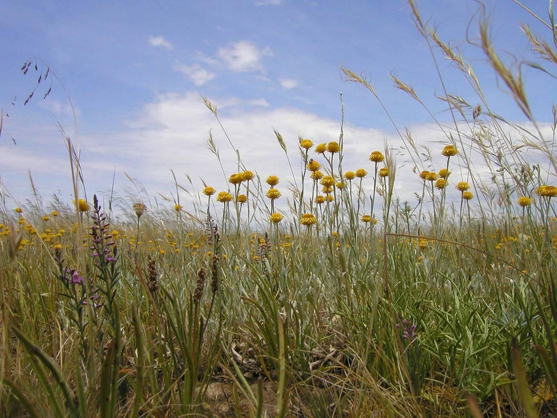 Prairie Wildflowers.jpeg
