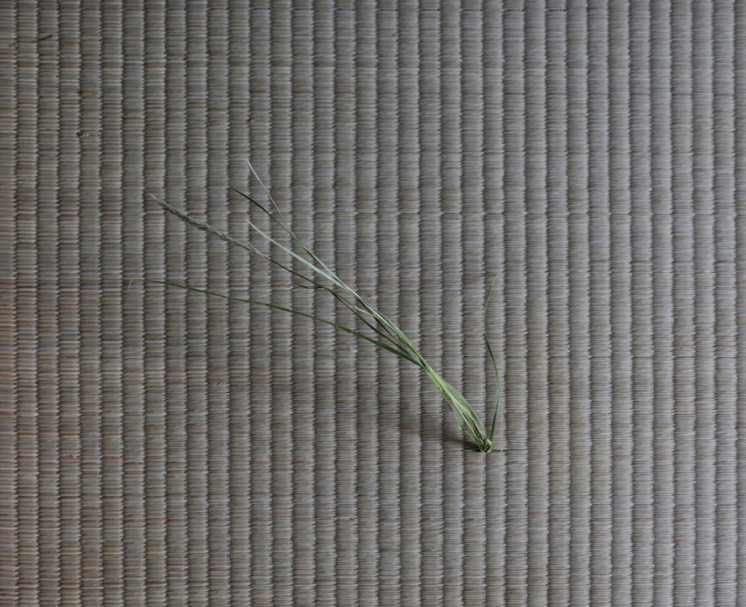 One Straw Revolution, detail, tatami, soil, various grasses, 2017