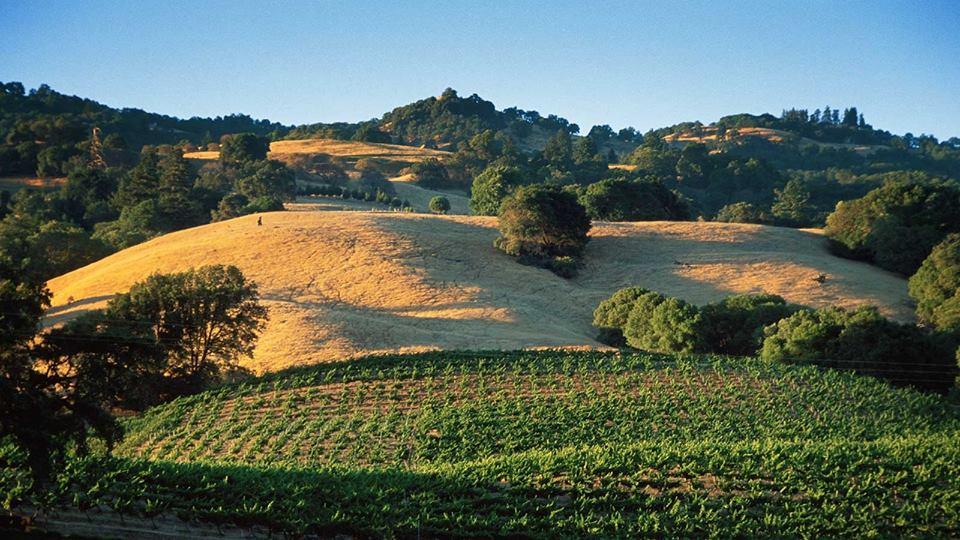 Picture of Yorkville Appellation.jpg