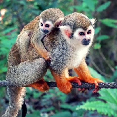 monkey-jungle-and-zip.jpg