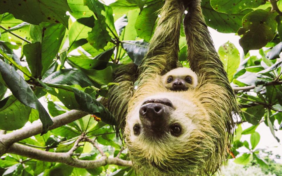 sloth-5792572159764-5795de0346a18-2.jpg