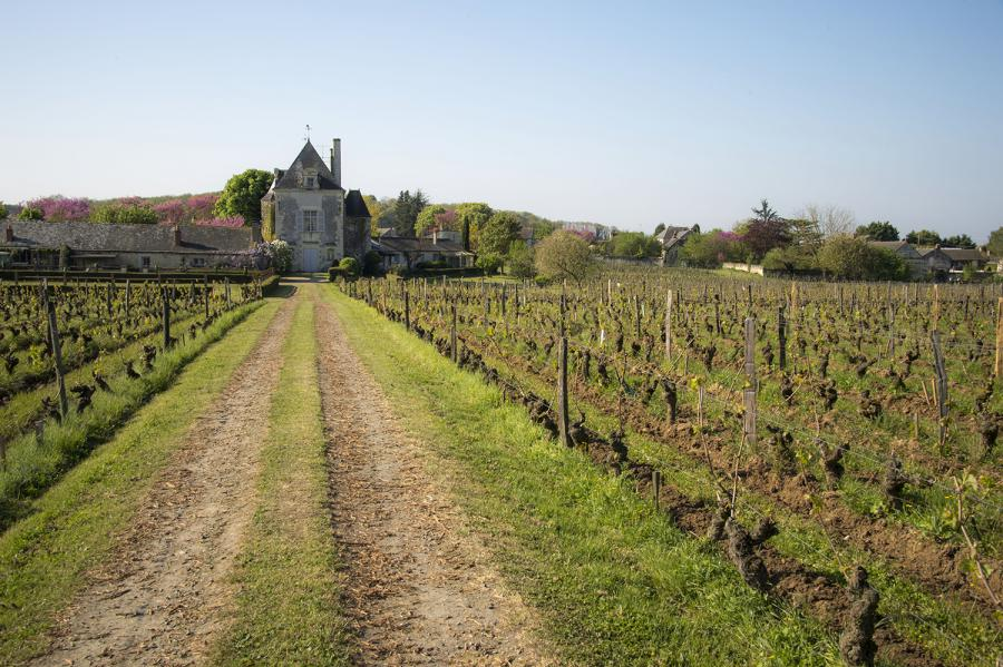 Chaintres Vineyard.jpg