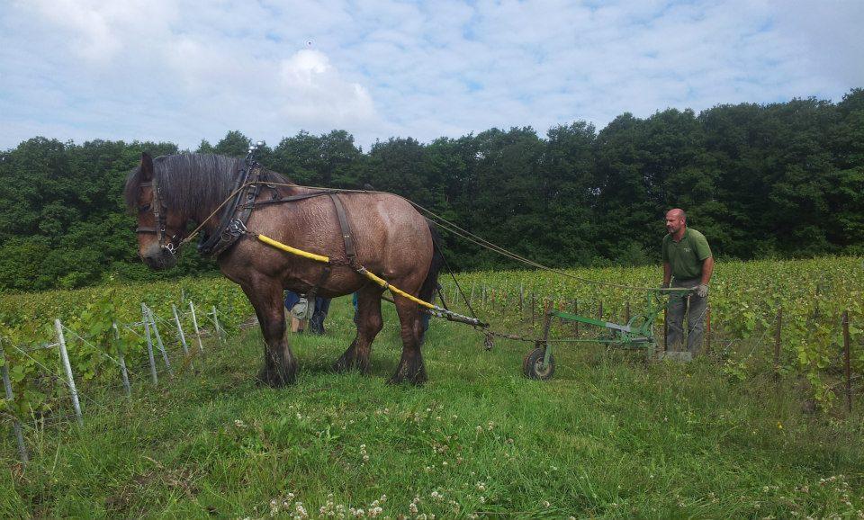 Vincent Laval Horse.jpg