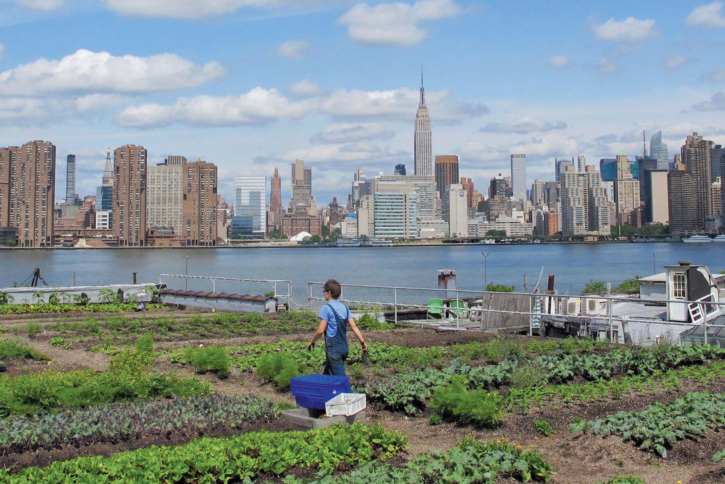 rooftop-garden-brooklyn-new-york.jpg