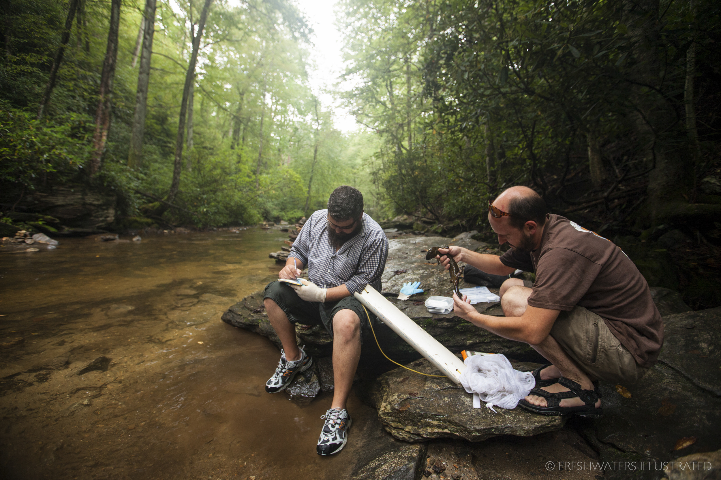 Biologists Jeff Humphries and Mike Sisson record and measure information on an Eastern Hellbender (Cryptobranchus alleganiensis) in a Southern Appalachian stream. North Carolina  www.FreshwatersIllustrated.org