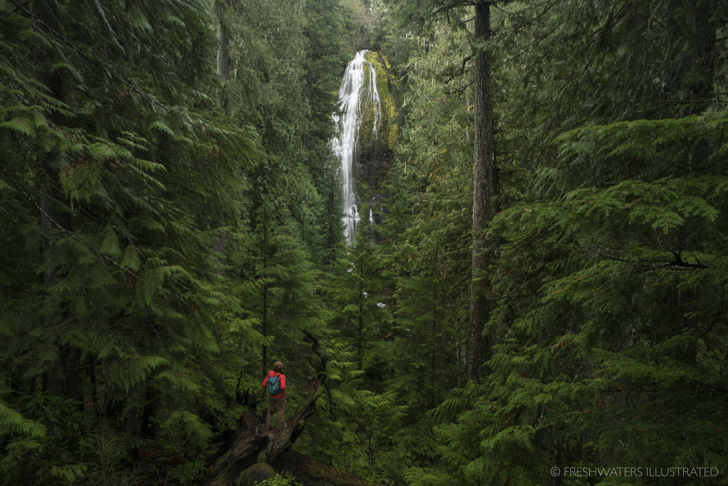 Waterfall hiking Proxy falls, Oregon