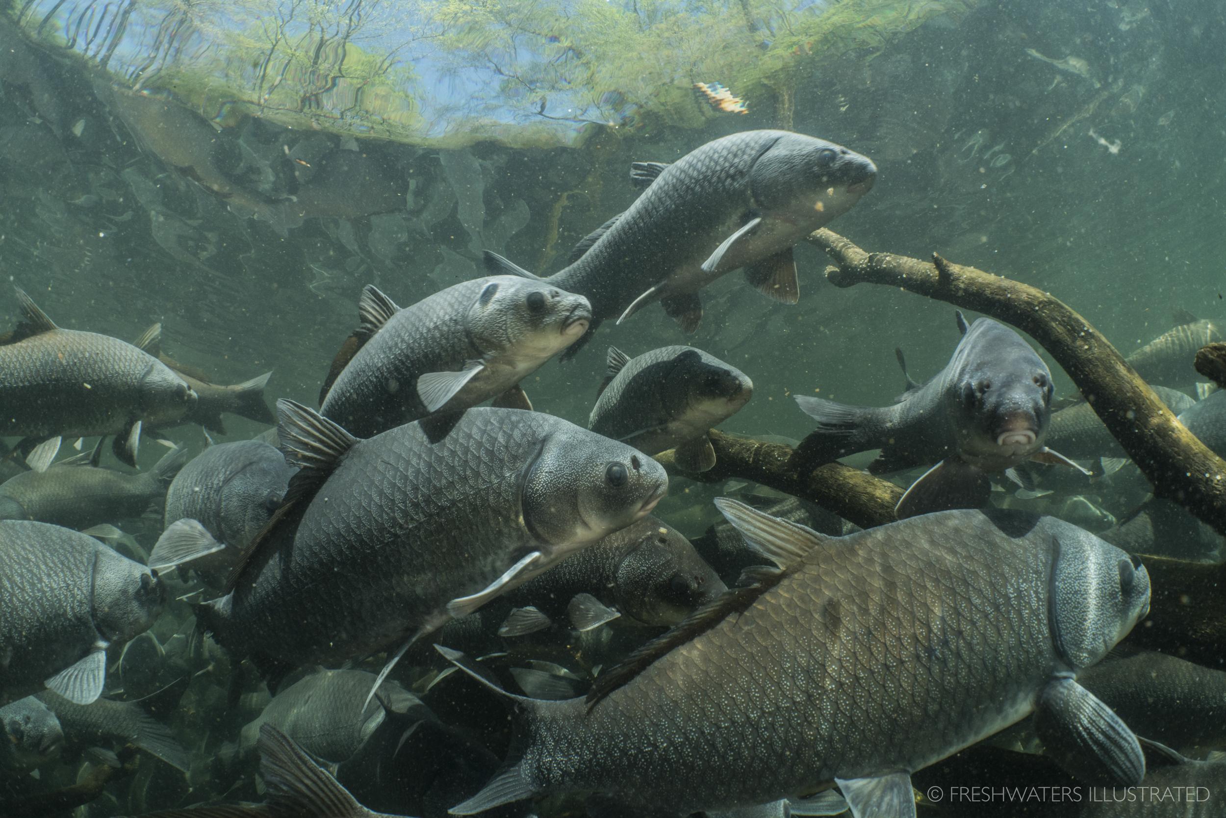 River life -