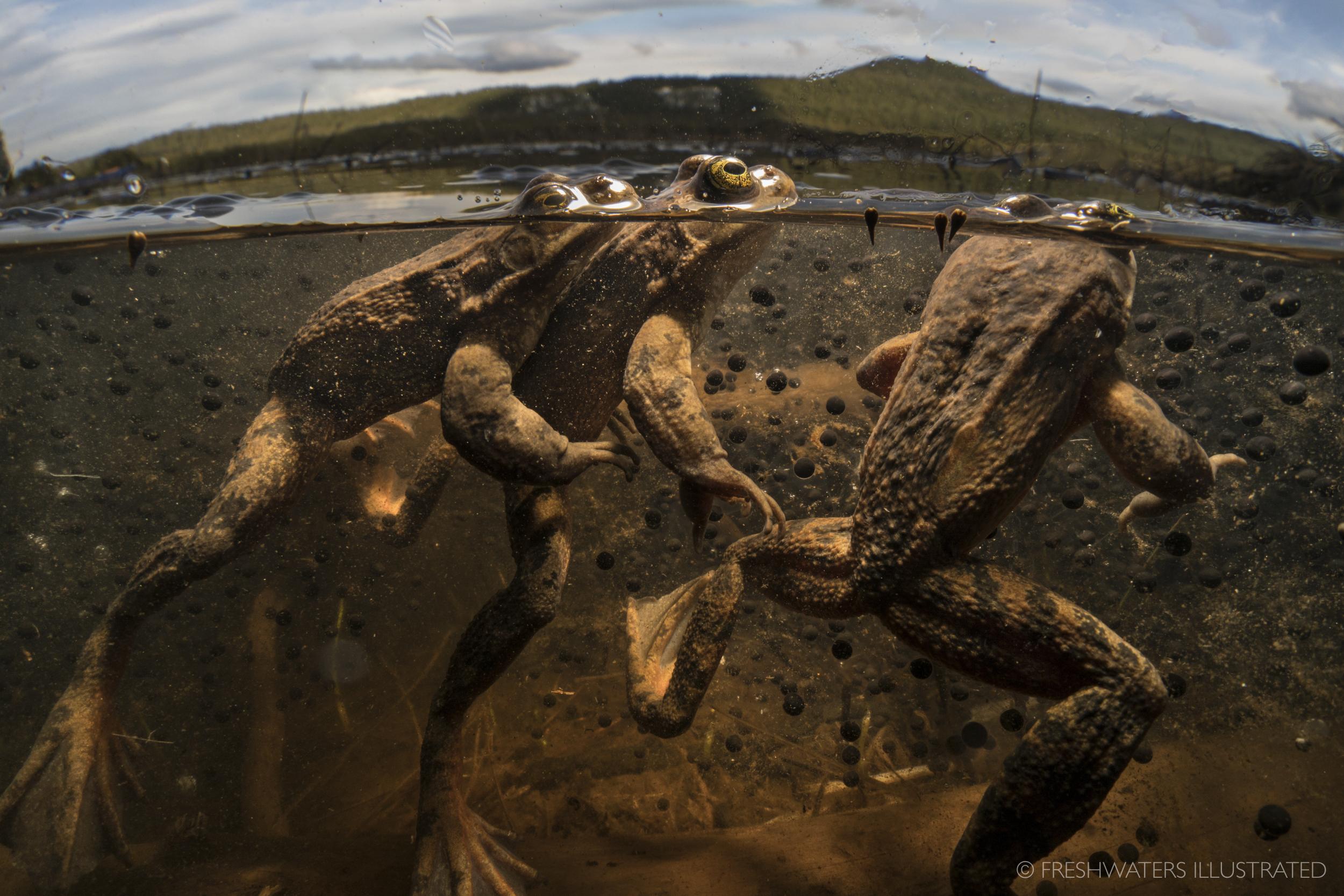 amphibians -