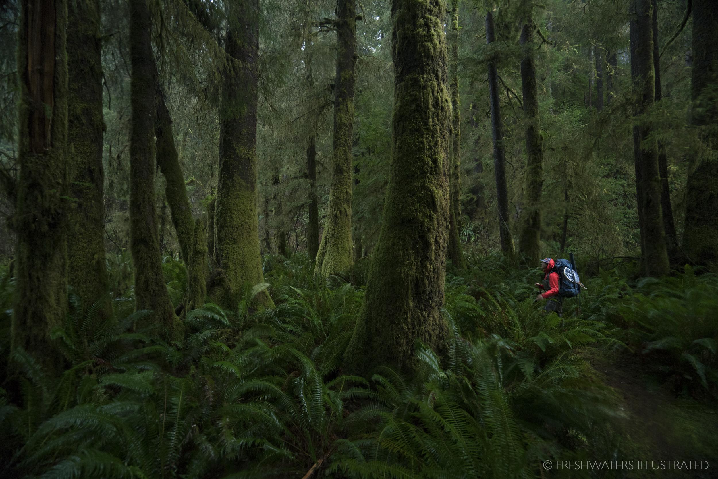 Backpacking in Oregon's old growth. Cummins Creek, Oregon