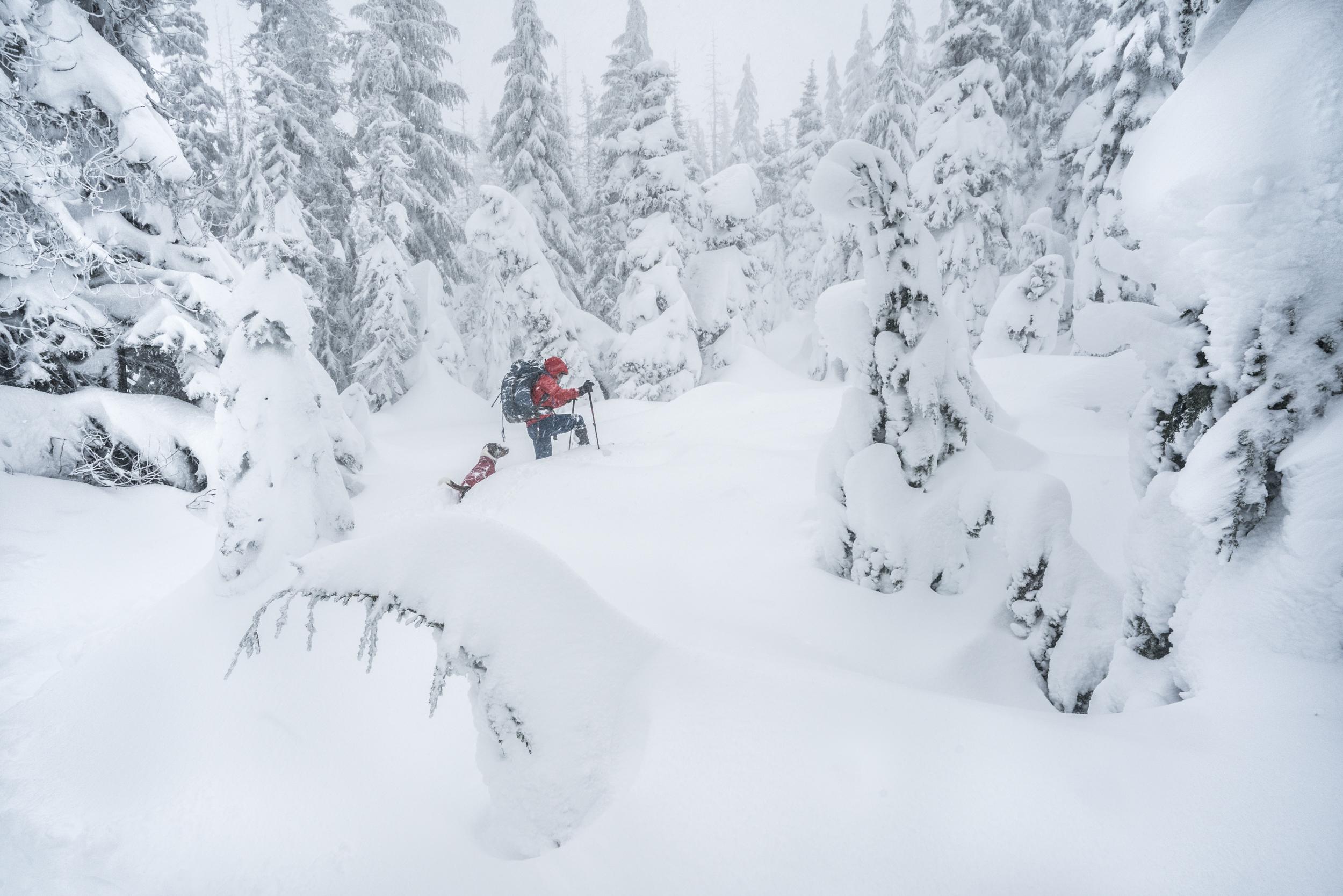 Snowshoeing through the deep snows of Oregon's Cascade Mountains Cascades, Oregon