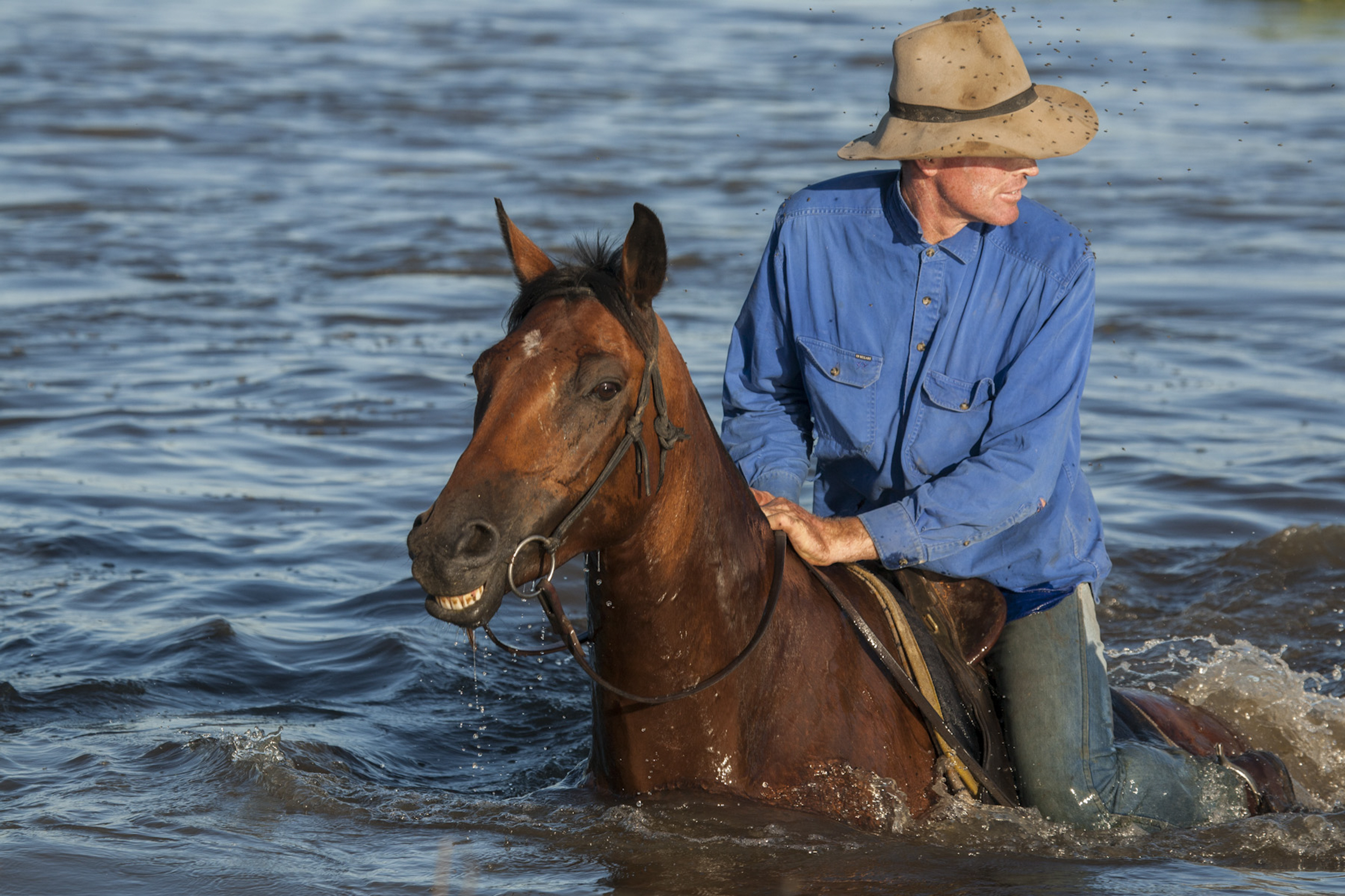 Garry Hall, Chairman of the Macquarie Marshes Environmental Landholders Association, crosses a river while herding his cattle. Macquarie Marshes, Australia