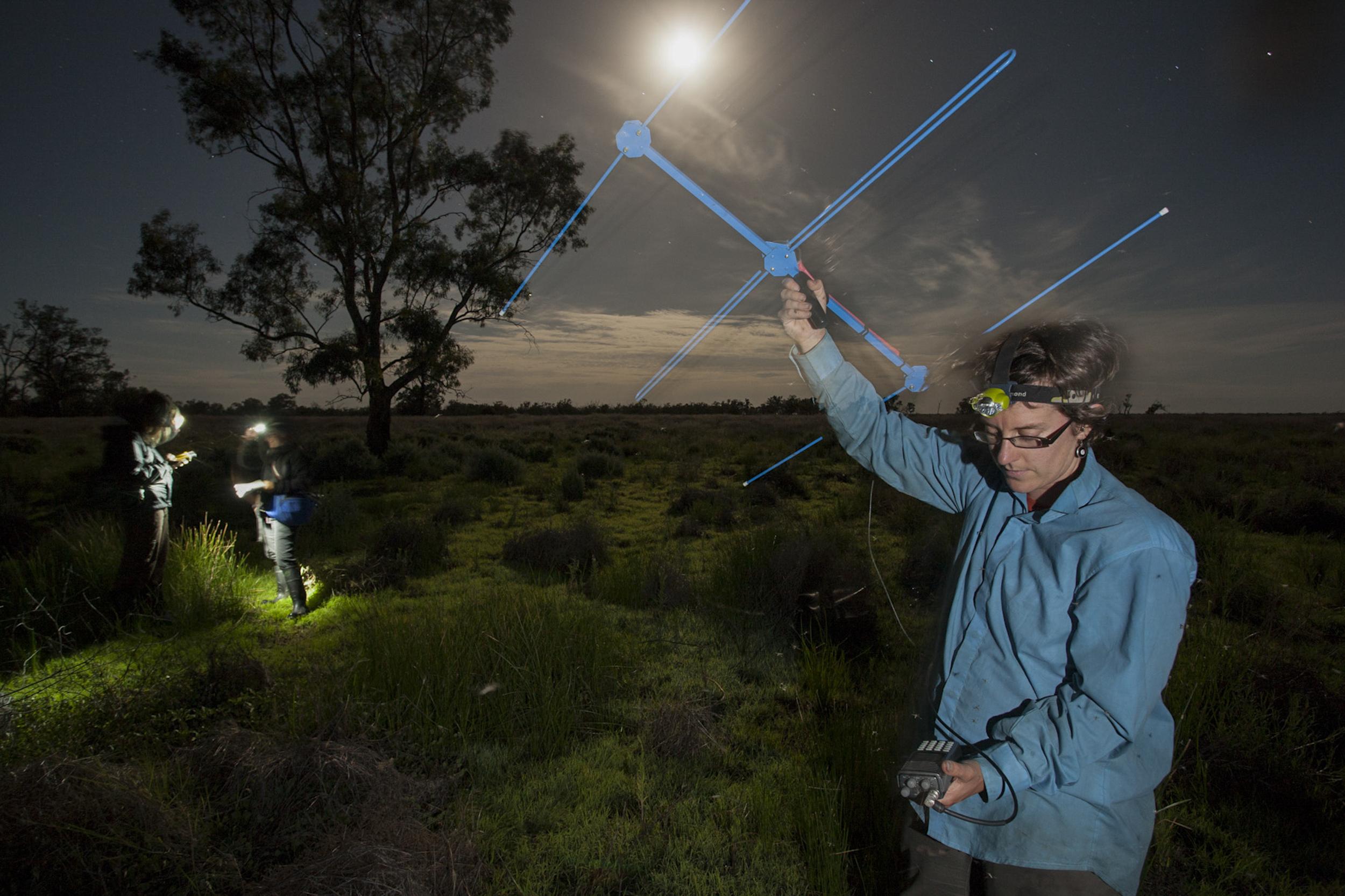 Tracking marsh frogs Macquarie Marshes, Australia