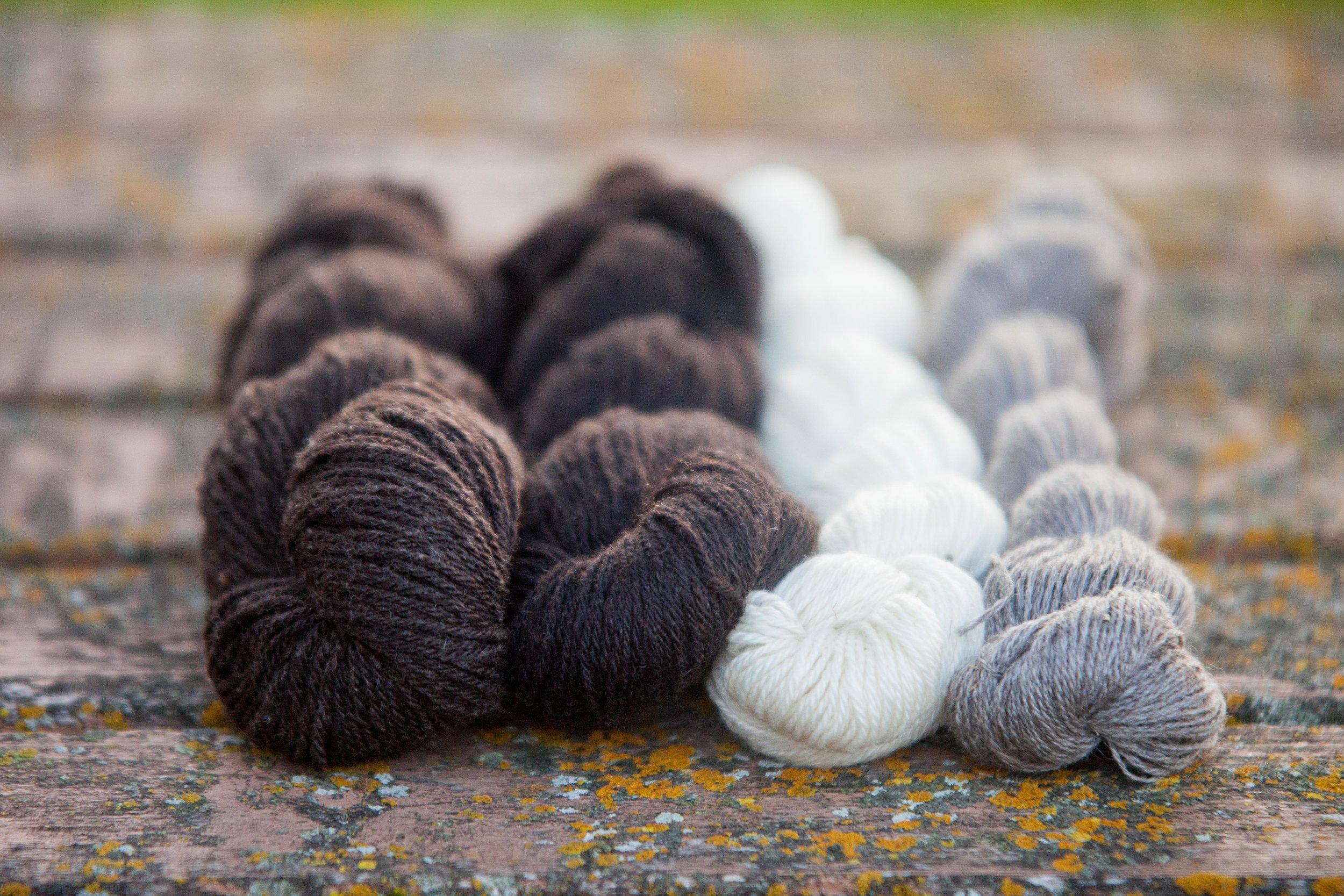 Wool2017.jpg