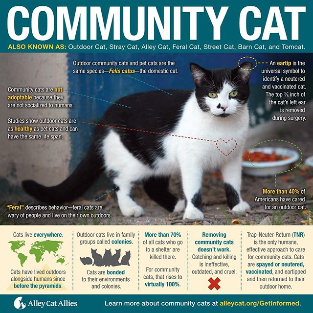 Let's join our friends at @alleycatallies in observing #GlobalCatDay! 🌎 Use today to spread the word about community cats to your neighbors and community leaders. Kentucky needs legislators that will commit to saving stray and community cats by creating humane policies that protect our feline friends. 🐈 TNR is the only viable solution! . . . #adoptlove #adoptdontshop #kentucky #lexingtonkentucky #catsofinstagram #catstagram #kittensofinstagram #tnr #tnrworks #soscats #purr #meow #catlover #crazycatlady #communitycats #kittens #spayandneuter #sharethelex  #sharethelex #spay #neuter