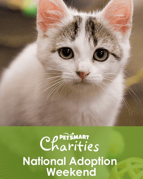 Are you looking for a way to help the homeless cats of your community? Join Spay Our Strays at PetSmart in Hamburg this weekend to find out how! We will be there Friday 3:00-6:00 PM, Saturday 12:00-5:00 PM, Sunday 1:00-5:00 PM. Stop by to say hi! 👋🏻 . . For the first time ever we are bringing a little surprise that may or may not rhyme with mittens 🧤🤫 . . #adoptlove #adoptdontshop #kentucky #lexingtonkentucky #catsofinstagram #catstagram #kittensofinstagram #tnr #tnrworks #soscats #purr #meow #catlover #crazycatlady #communitycats #kittens #spayandneuter #sharethelex  #sharethelex #spay #neuter #petsmart