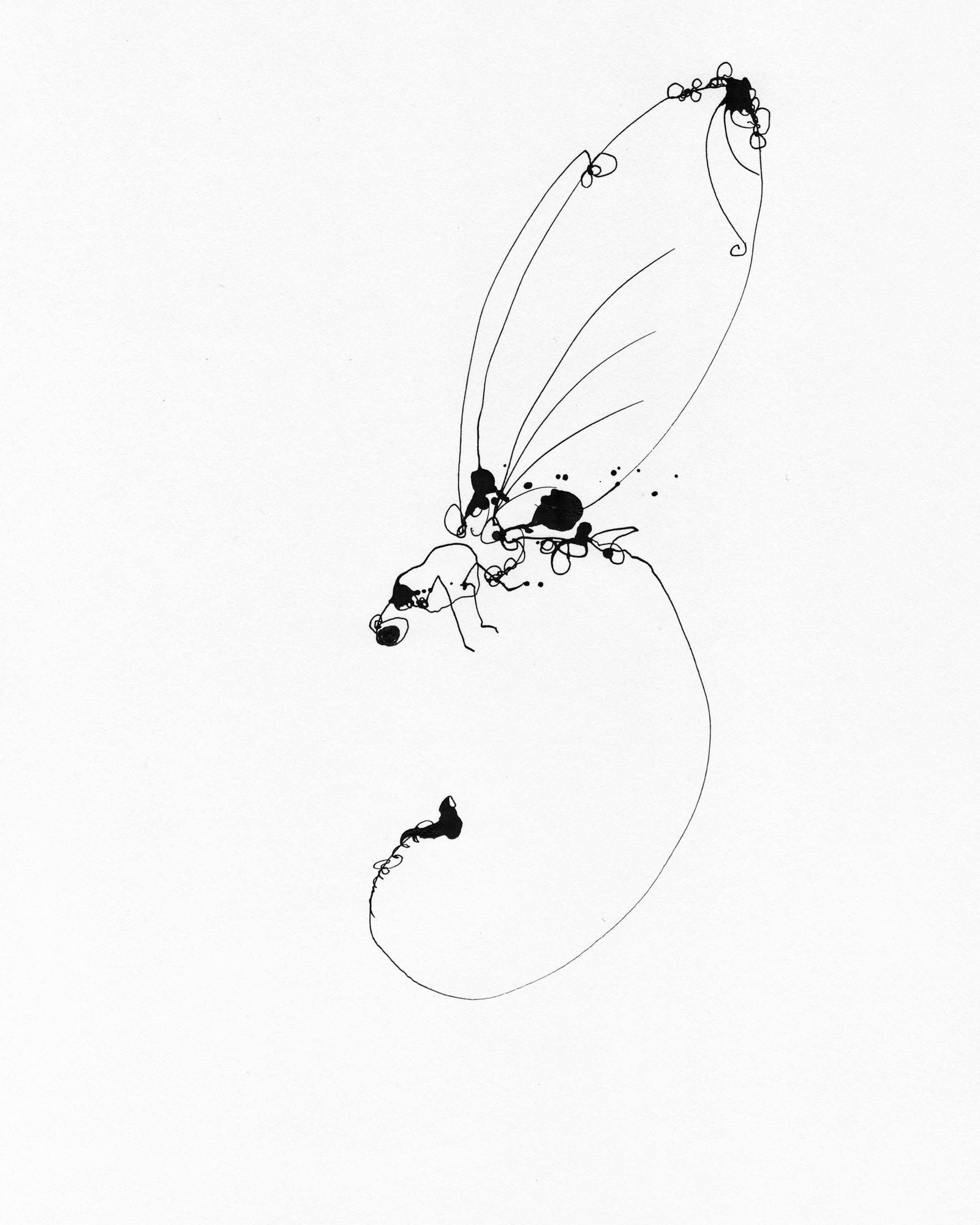 Dragonfly_25_8x10.jpg