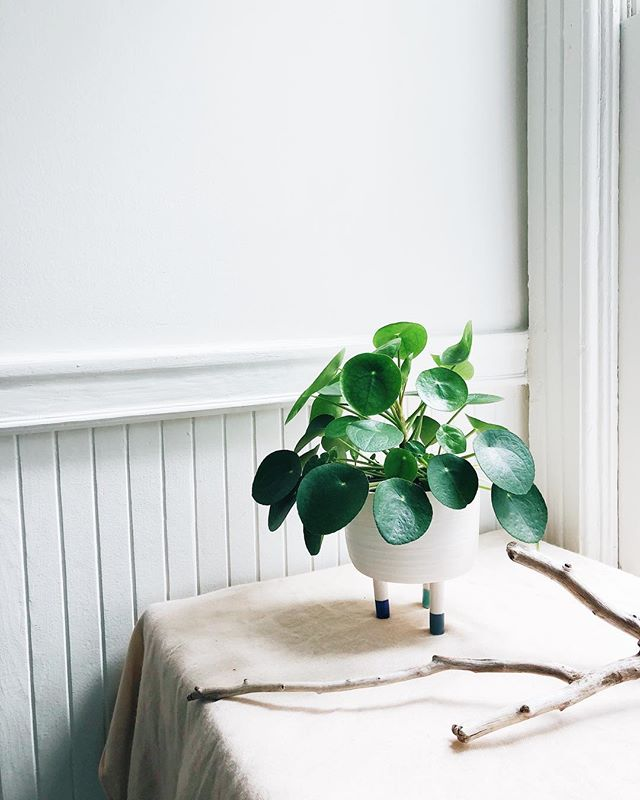 My pilea has grown out of control in this pot and it make me so happy =D