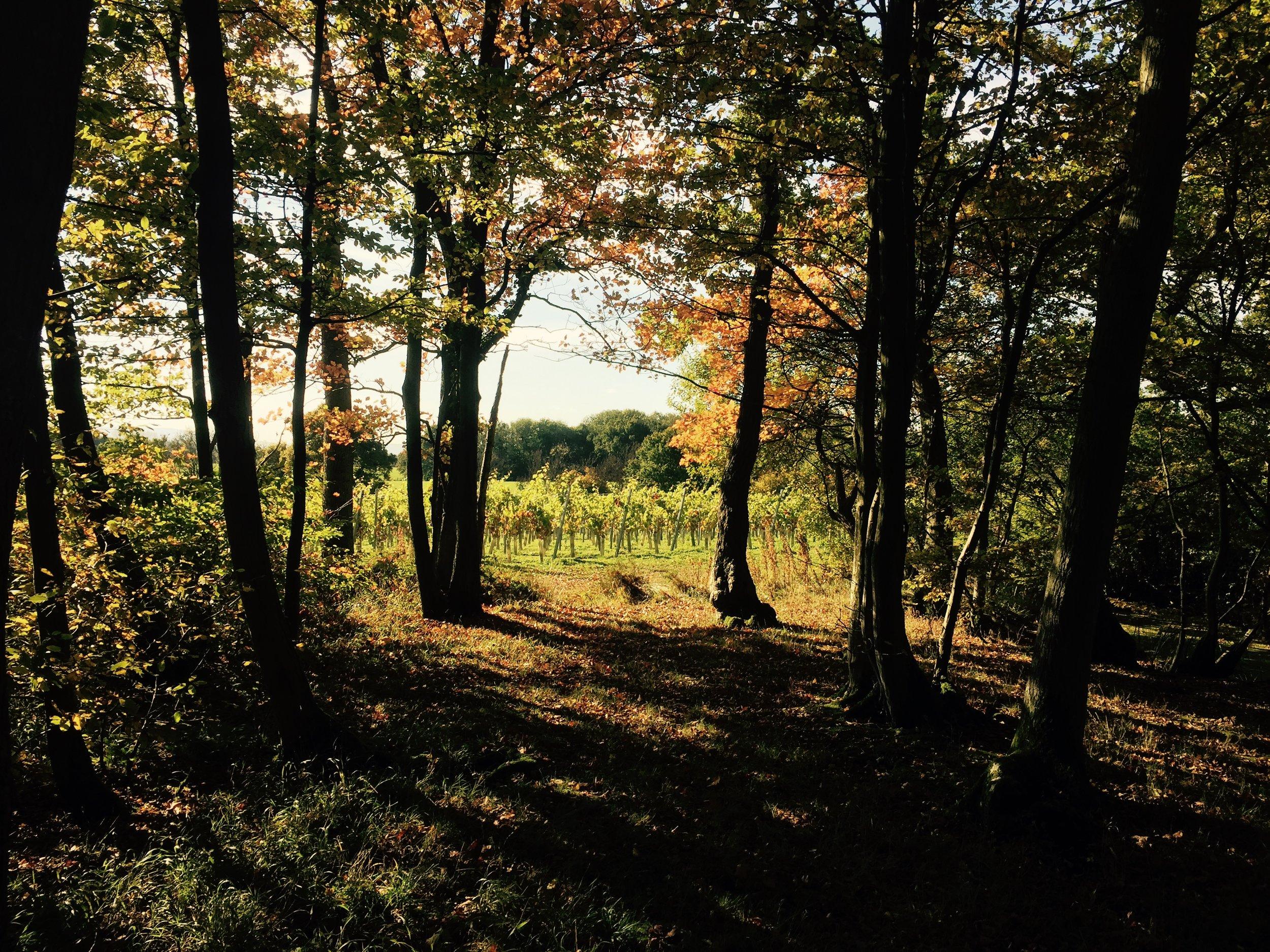 Autumn 15.jpg