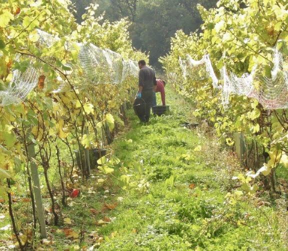 Harvest 17 (1).jpg