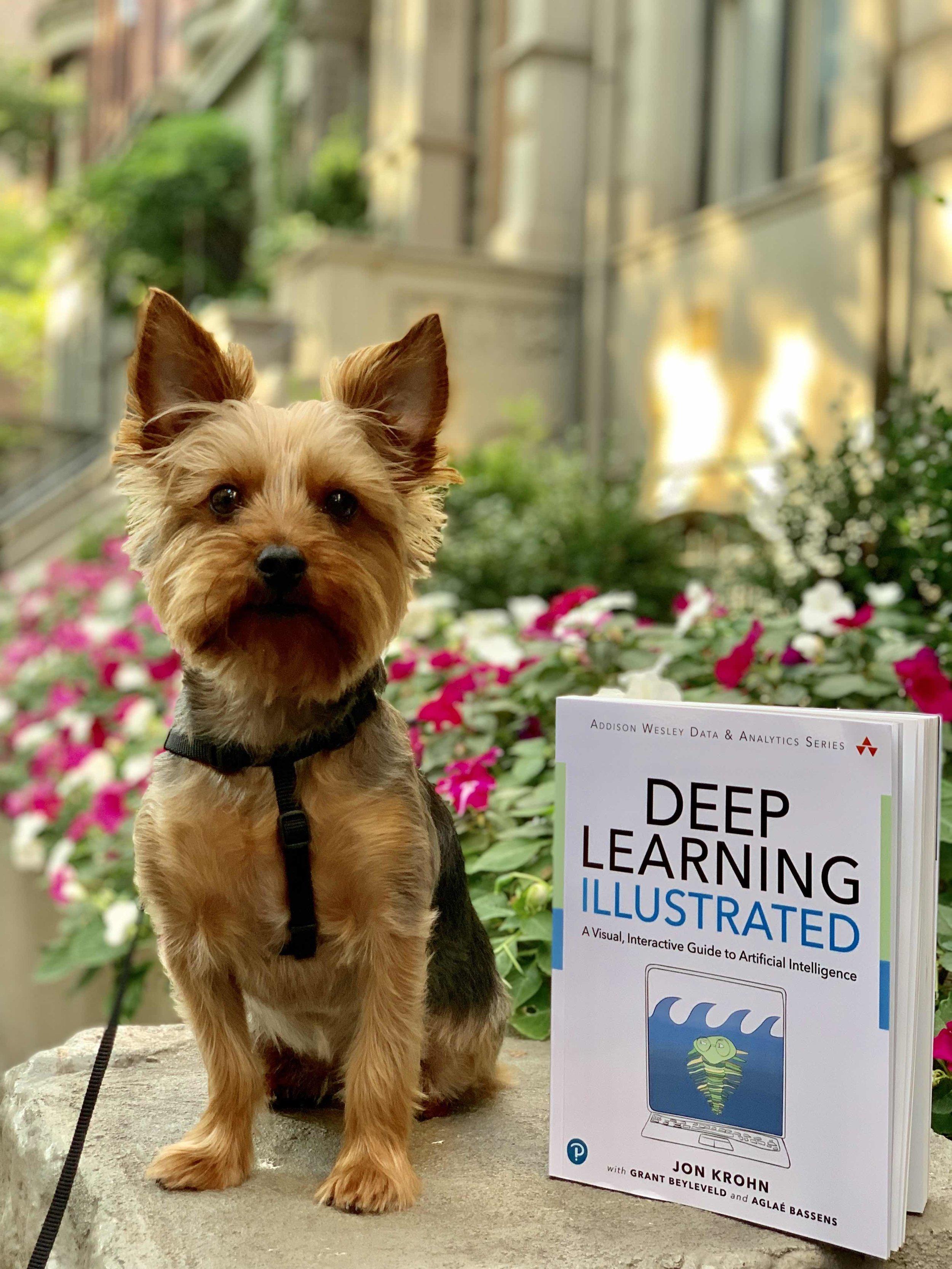 deep-learning-illustrated-jon-krohn.jpeg