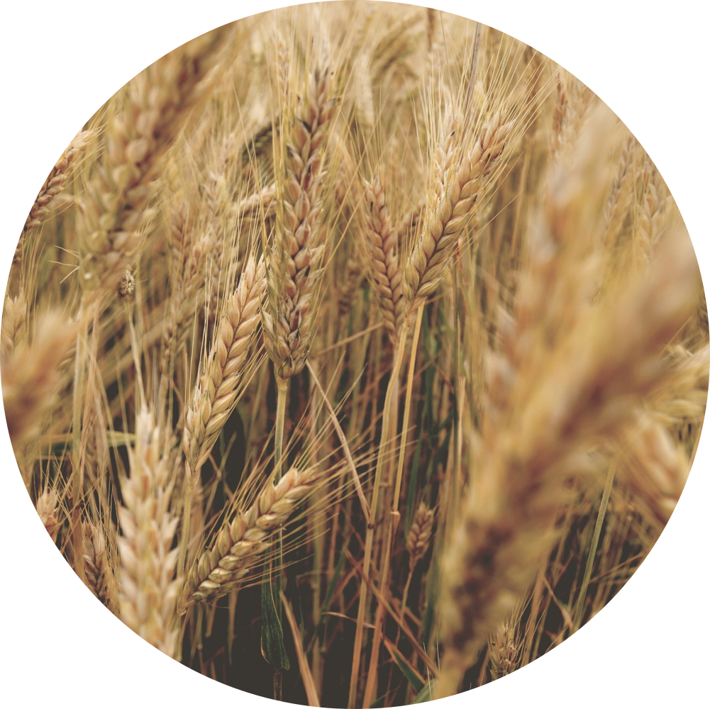 crops.png