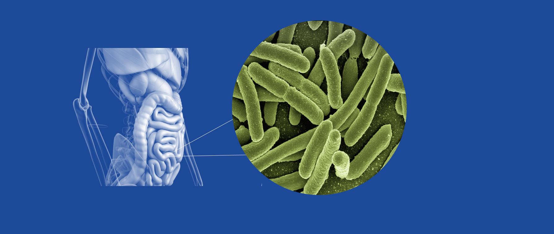 gut bacteria.png