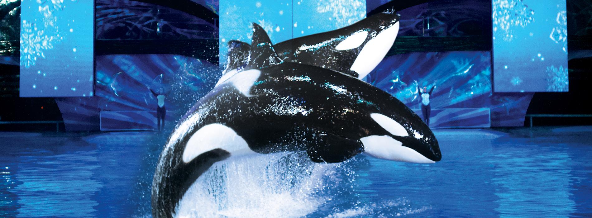 """SeaWorld Shamu Show: """"Believe"""""""