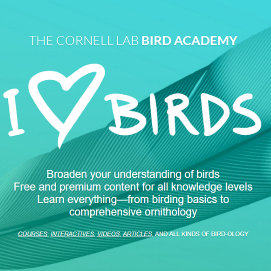 Cornell Bird Academy I Love Birds SQ.jpg