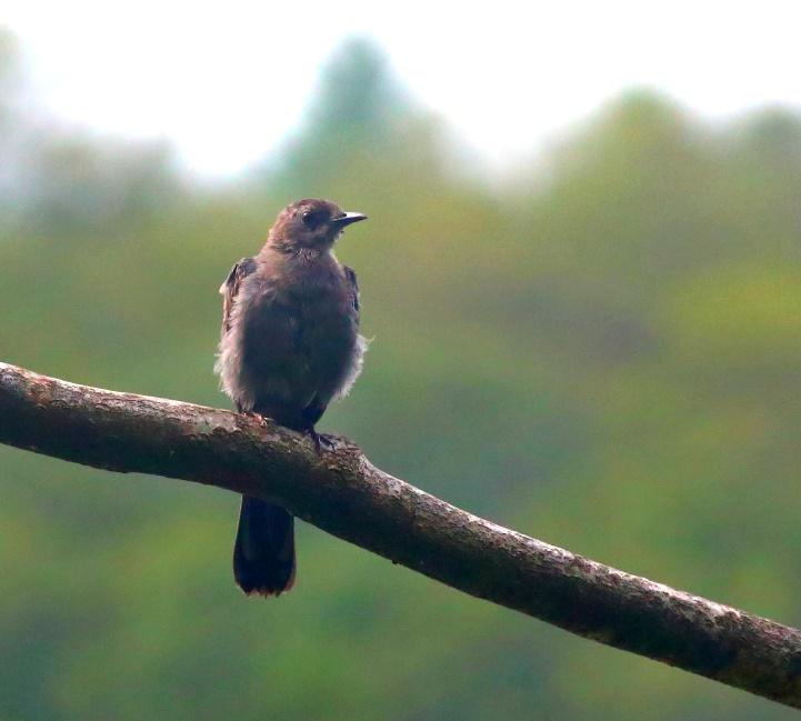 Cat Bird.jpg