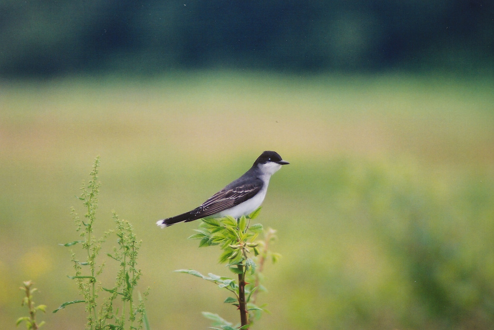 Glynwood Bird.jpg