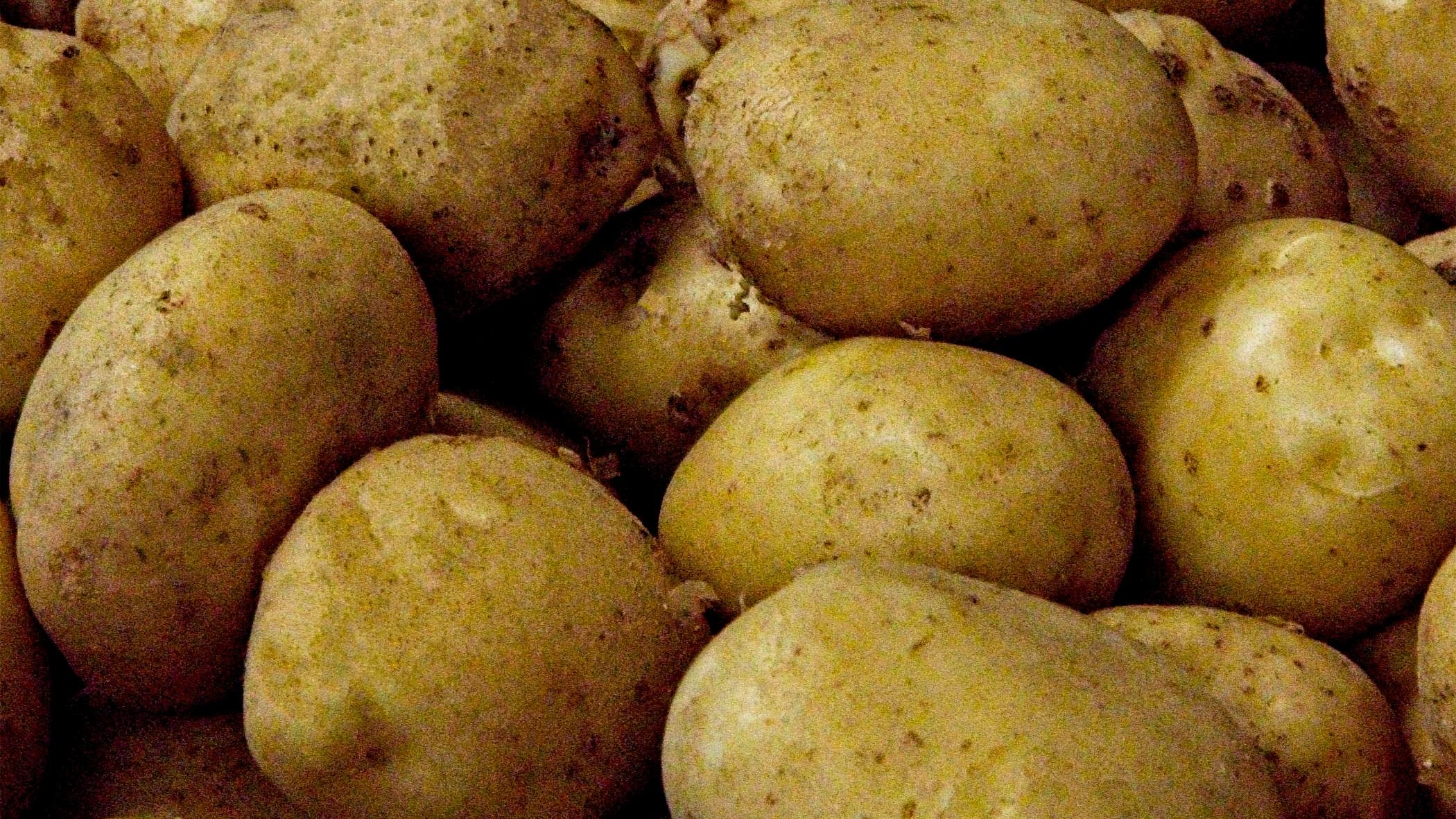 white potatoes -