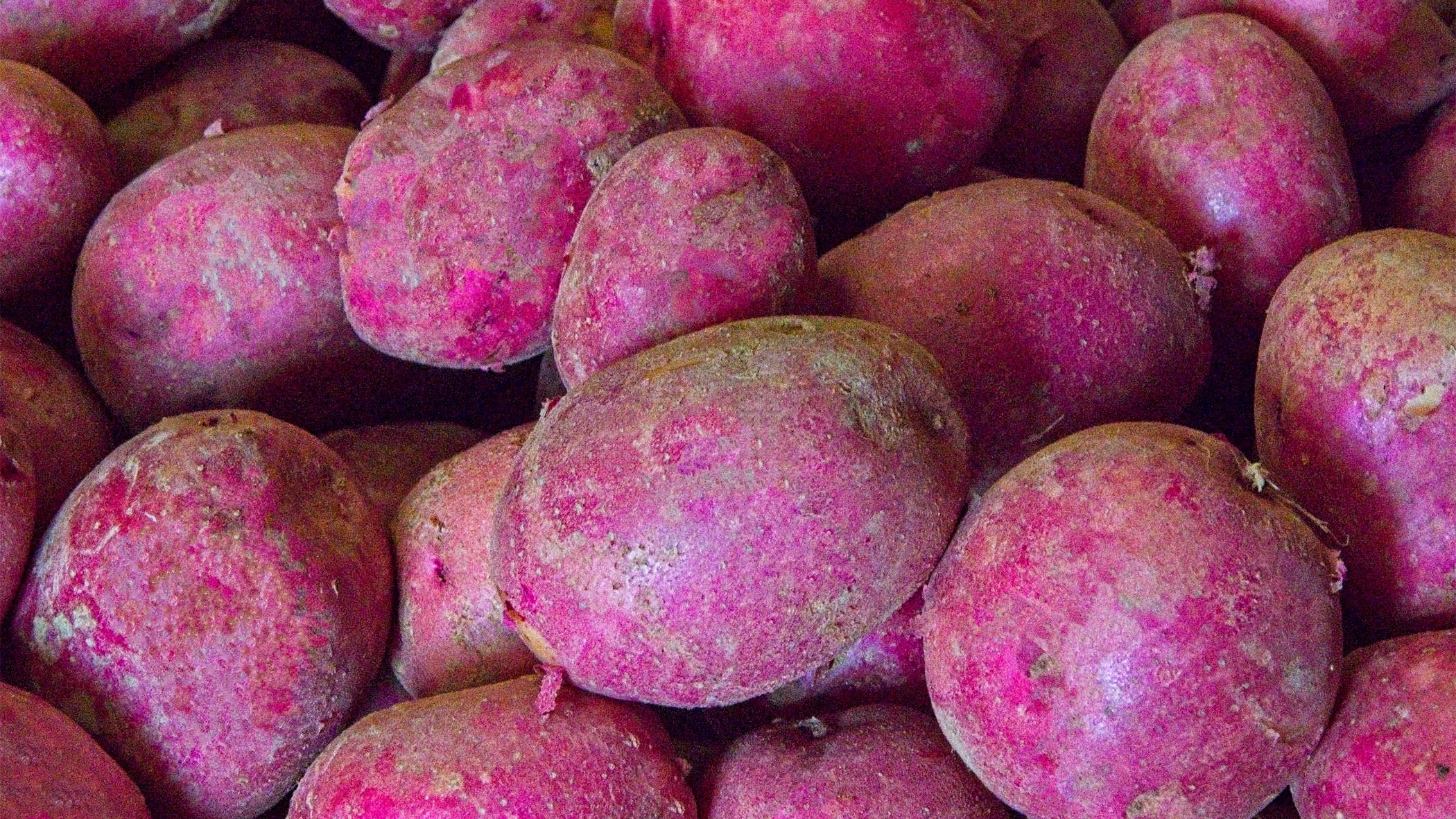 Red potatoes -