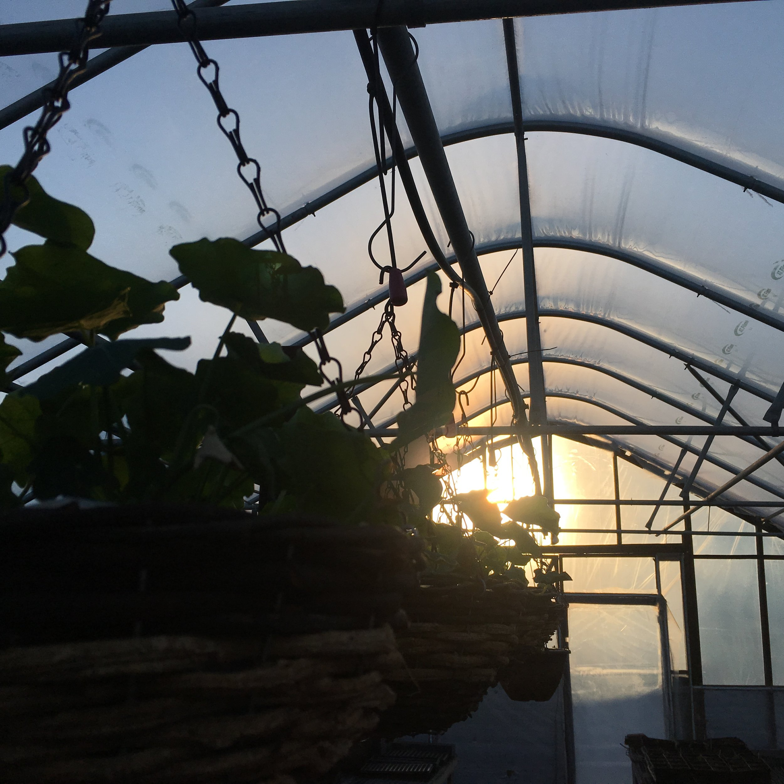 One year ago today in the greenhouse.