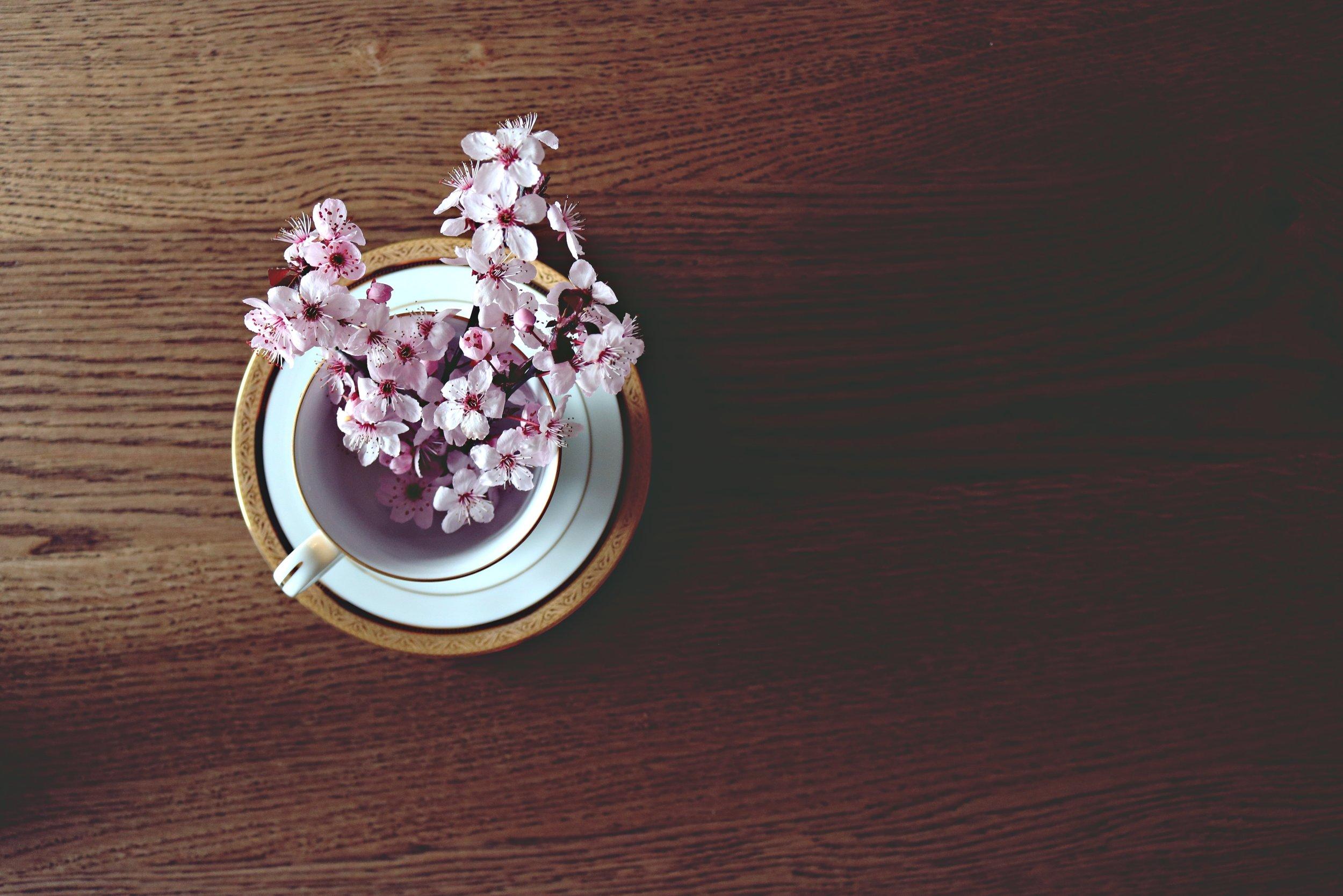 beautiful-bloom-blooming-371393.jpg
