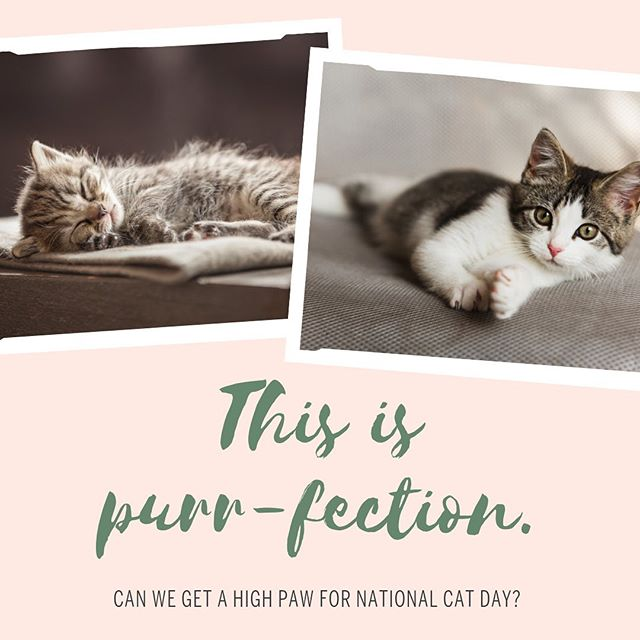 You might say we're FELINE good about this one. Another fun national holiday that we didn't know we needed. #summerfun