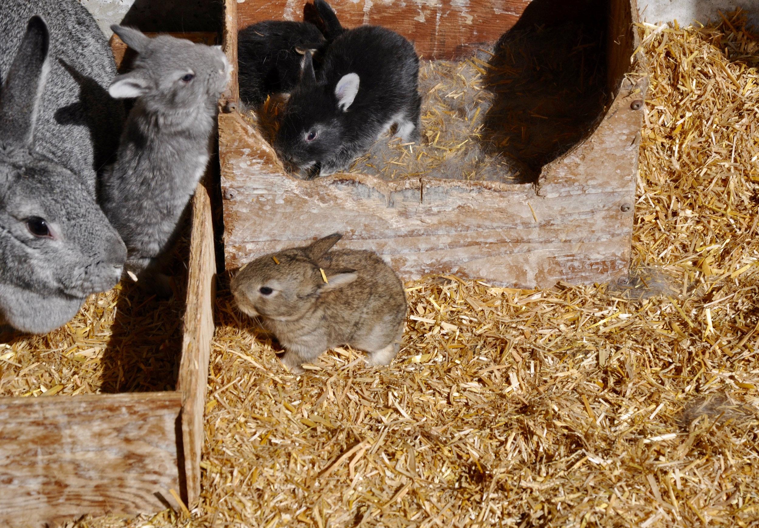 SB_Rabbits_Straw.jpg