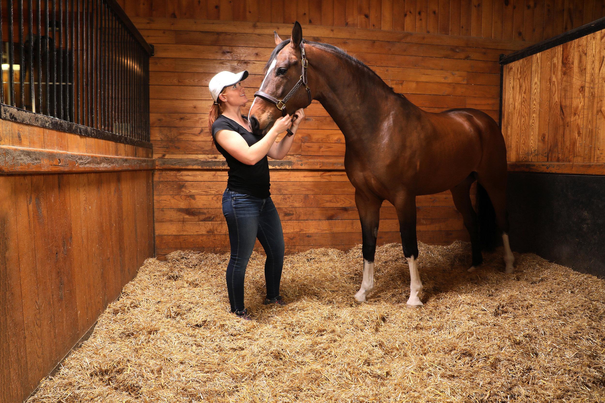 StrawBoss_Horse.jpg