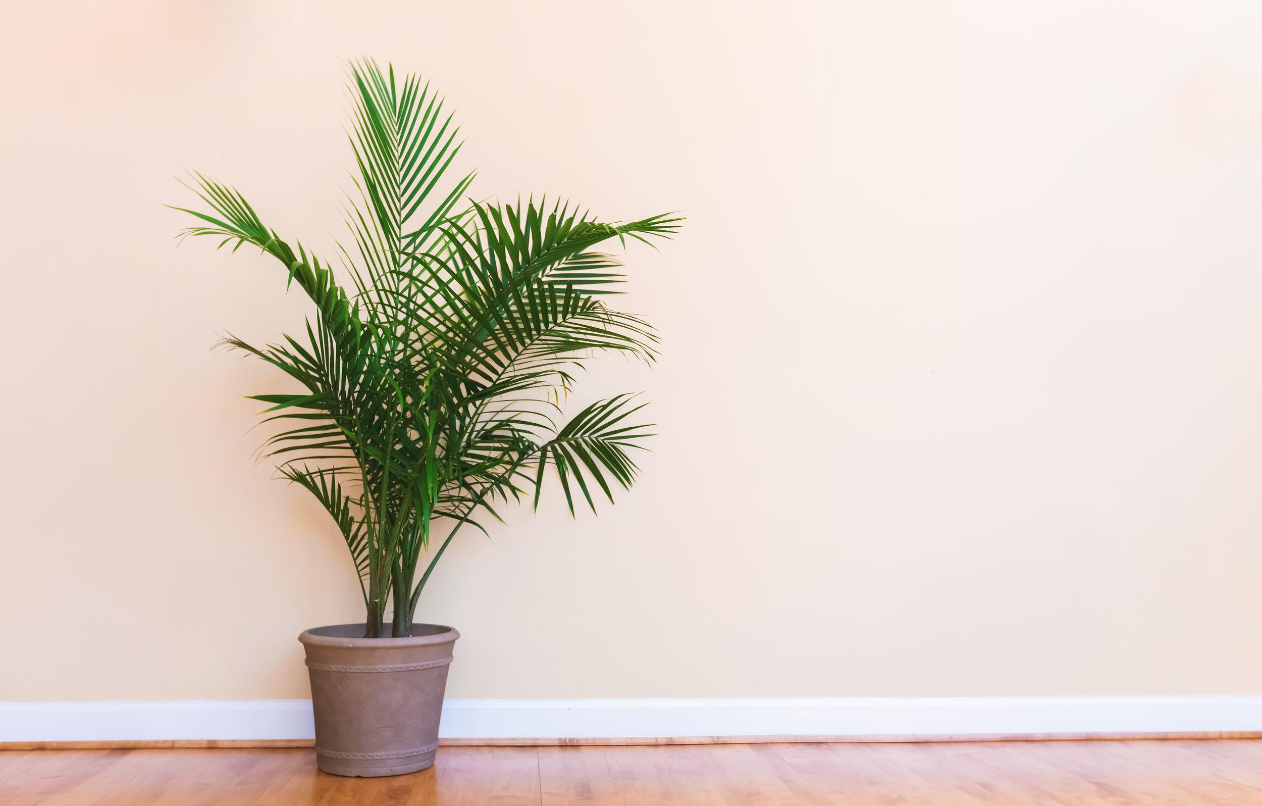 Palm Bamboo_AdobeStock_198270809.jpeg