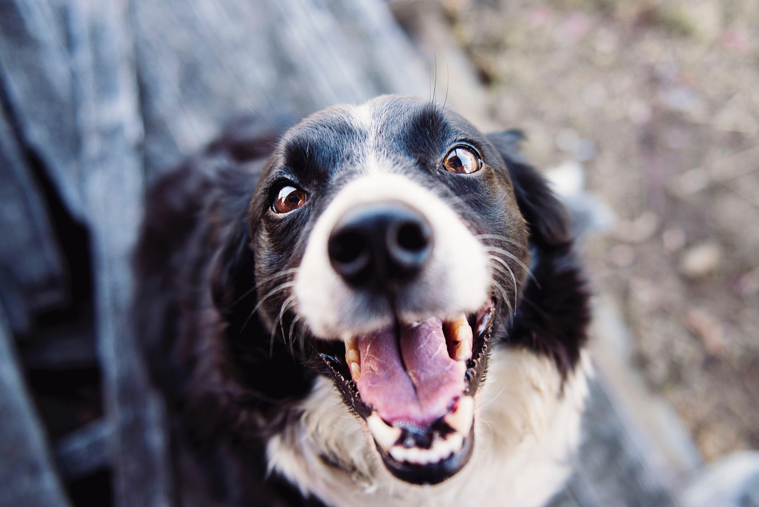 animal-blur-canine-551628.jpg