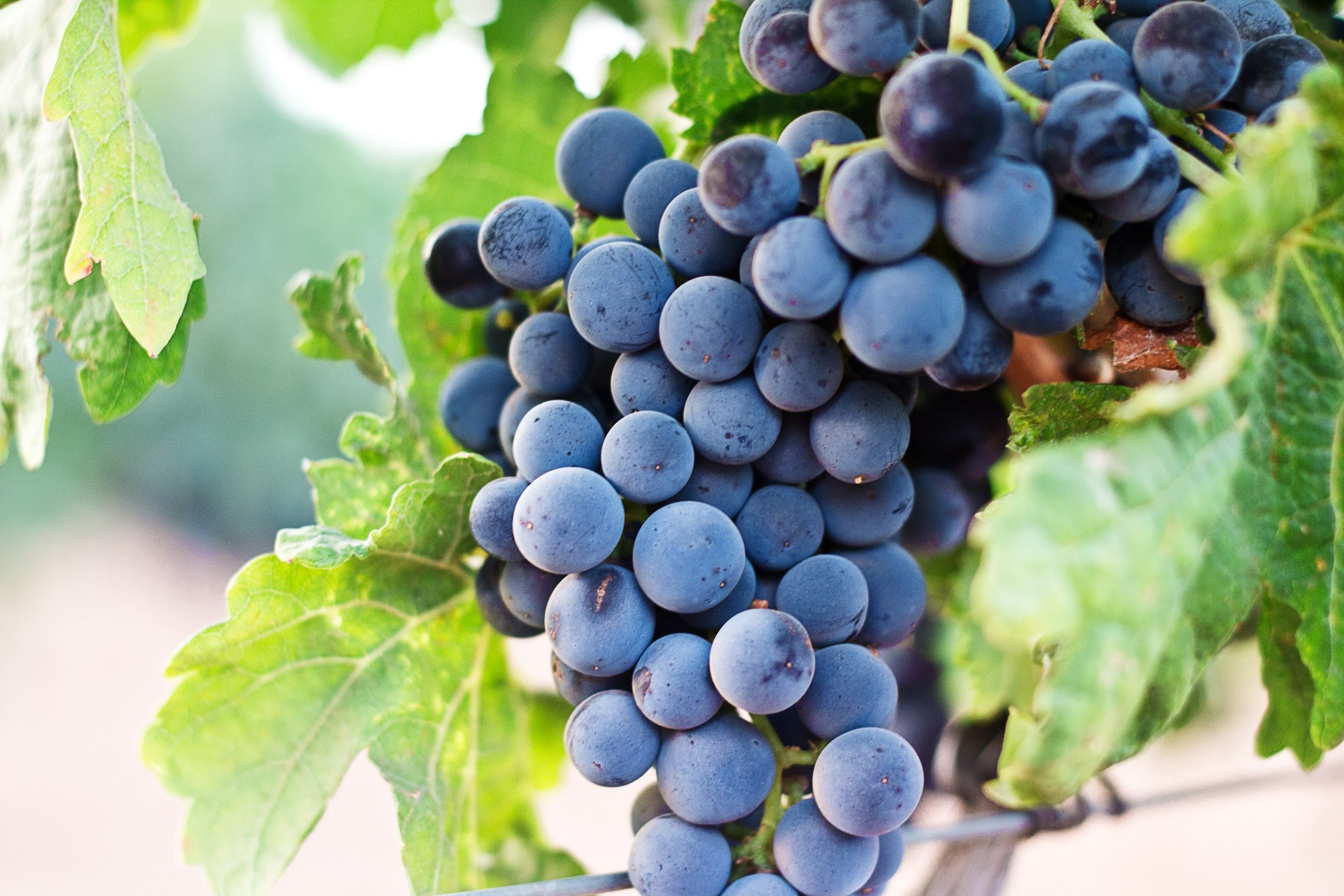 6. Grapes -