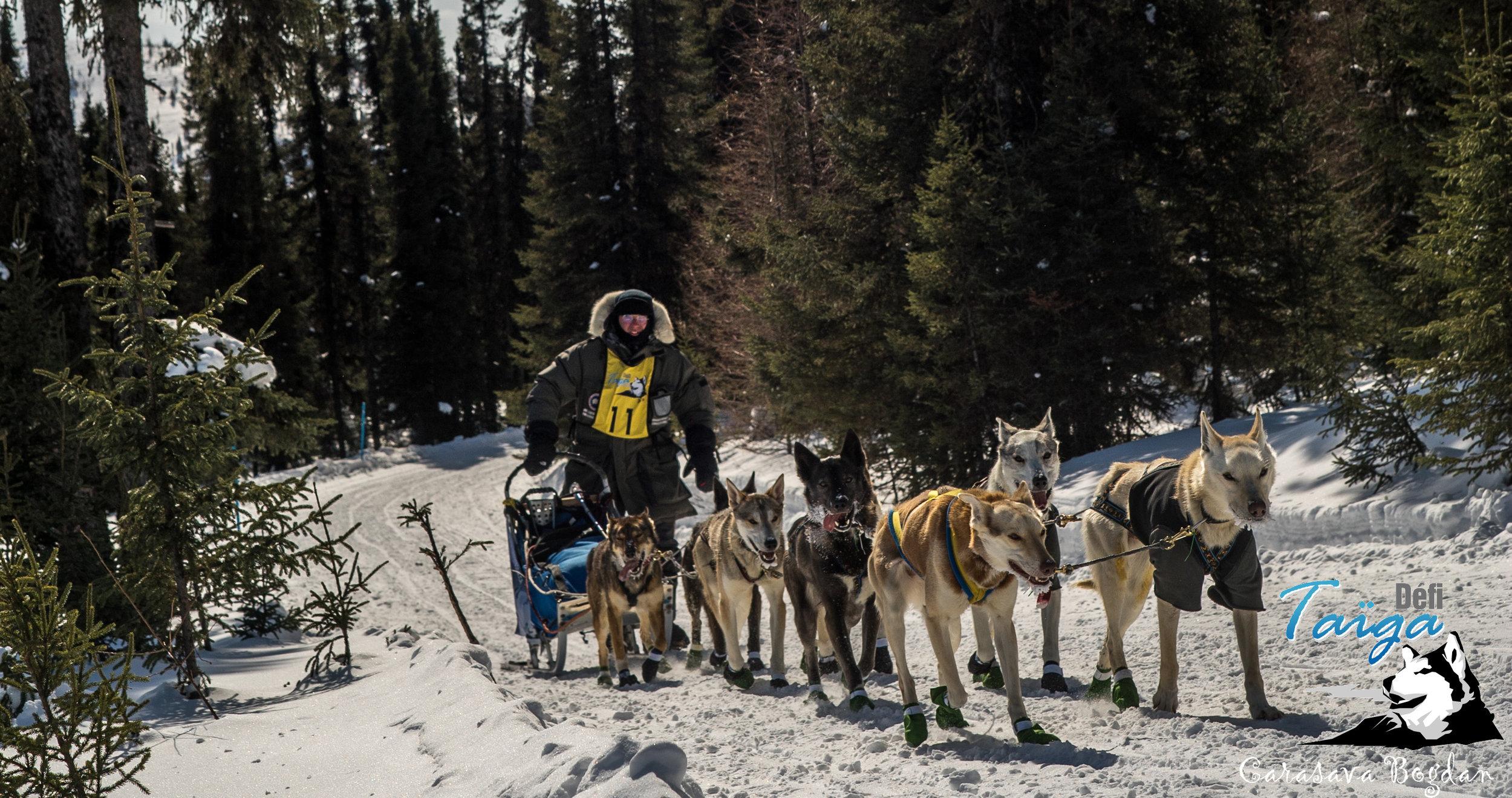 Mushers édition 2016 - Liste des mushers participants à l'édition 2016 du Défi Taïga