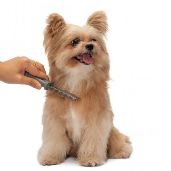 img_how_to_brush_your_dog_s_hair_1384_600.jpg