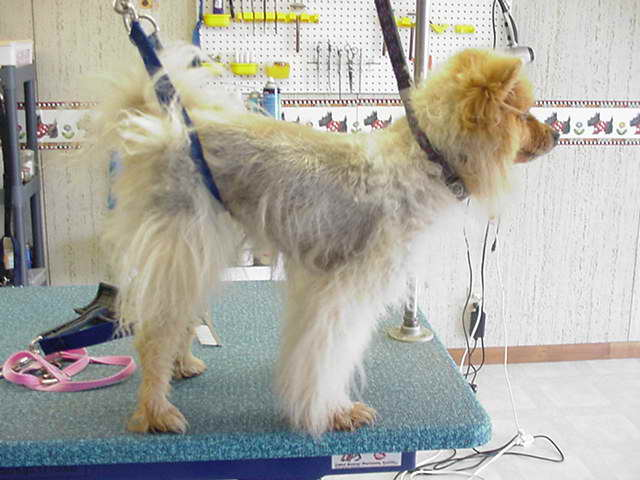 shaving-dogs-double-coat.jpg
